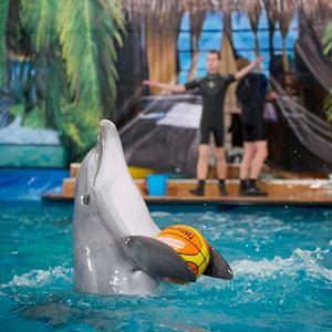 Дельфинарии, океанариумы Ярославля