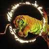 Цирки в Ярославле