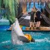Дельфинарии, океанариумы в Ярославле