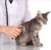 Ветеринарные клиники в Ярославле